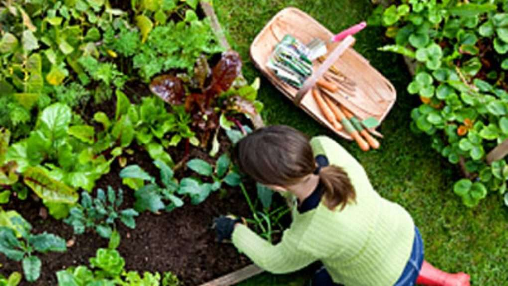 The statement 'My favourite hobby is gardening because it is good for our health' has been proven to be right